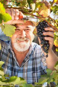 Winery & Vineyard Insurance